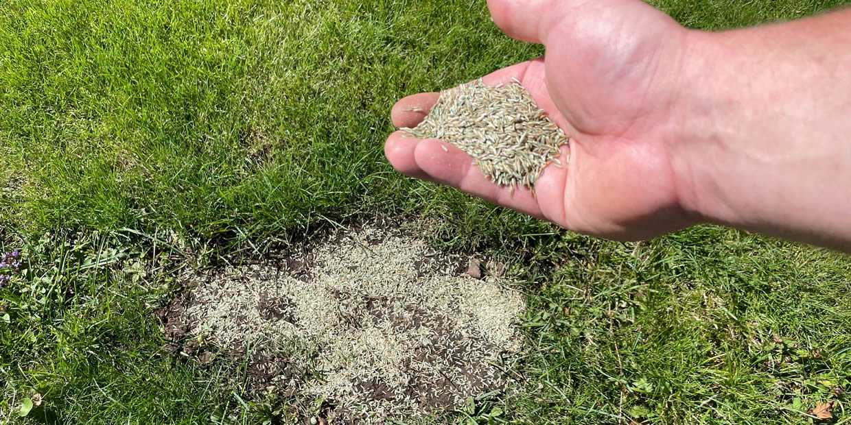Best Grass Seed UK