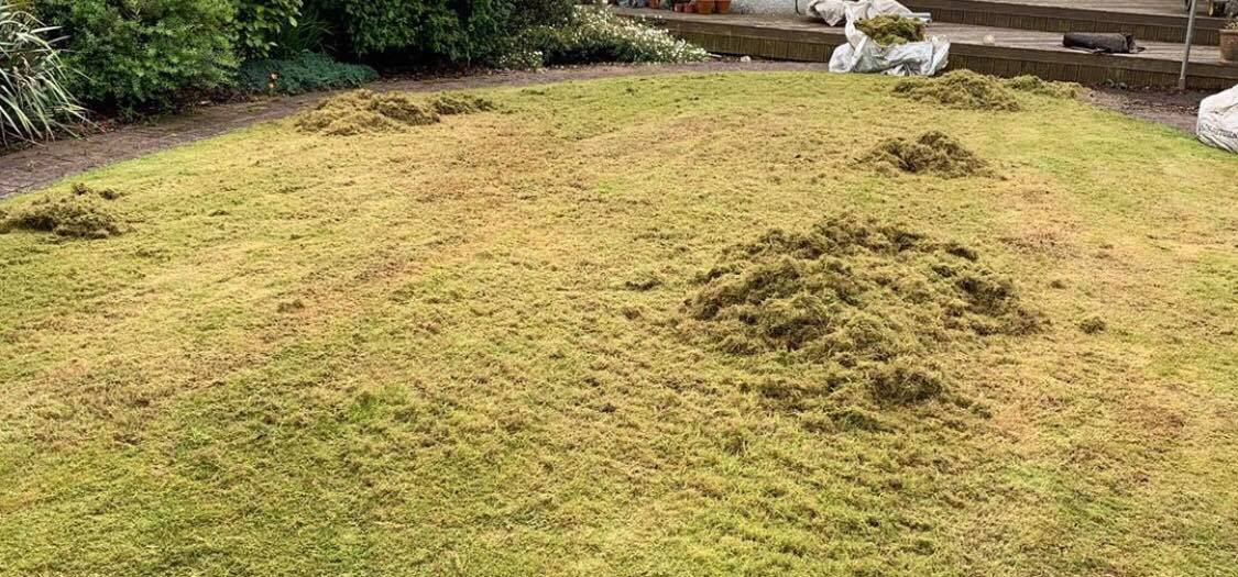 best moss killer for lawns uk