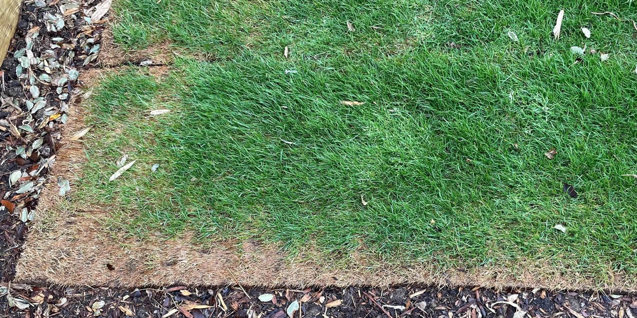 how to care for new turf